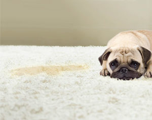 pet stain and odor removal Reno NV